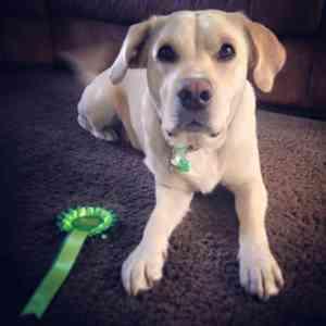 Photo by Listen Dog Training, Peterborough