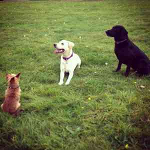 Photo by Listen Dog Training, Peterborough