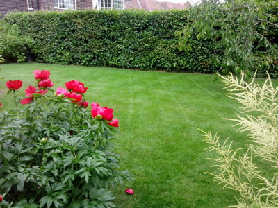 Photo by Littleworth Lawn Care