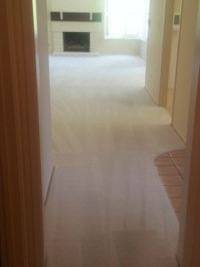 Photo by Nw4 carpet cleaning