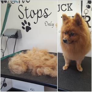 Photo by Pawfect Perfection Dog & Cat Groomers