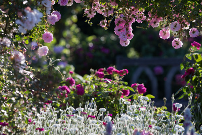 Photo by RHS Garden Rosemoor