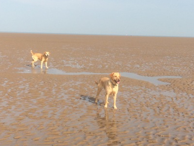Photo by St Annes 1-2-1 Dog Walking & Pet Services