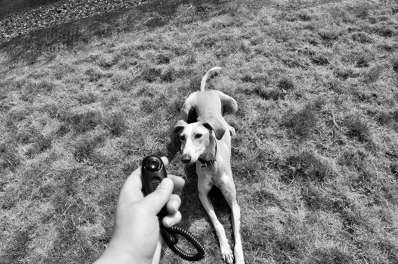 Photo by Suppawt- Dog Training