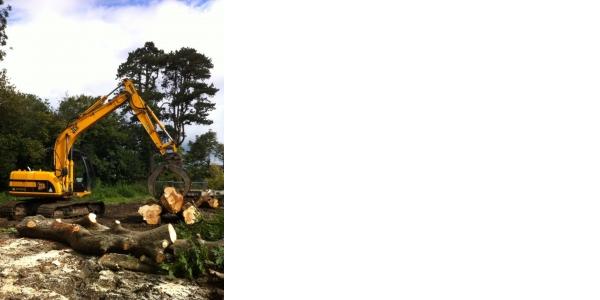 Photo by the tree surgeons ltd