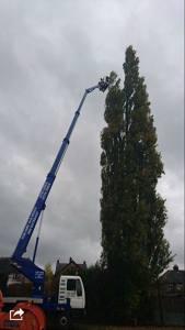 Photo by Tree Man Tree Specialist