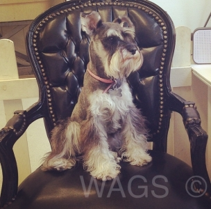 Photo by WAGS Dog Grooming