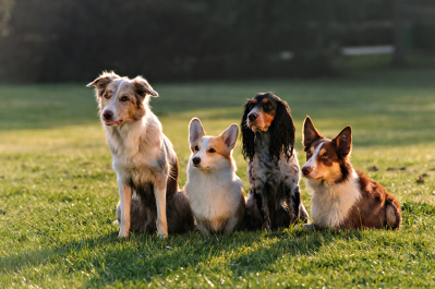 Photo by Wakefield Dog Training Centre